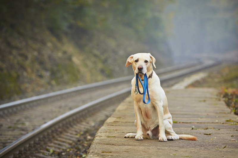 taking a dog on a train