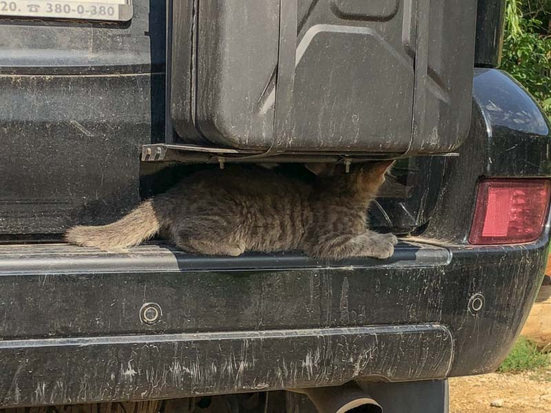 shy cat under jerry can