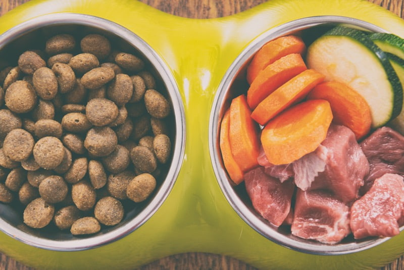 recommended dog food for travel